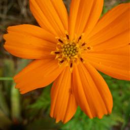 flower orangeflower myphotography nature orange
