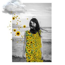 freetoedit sunflower