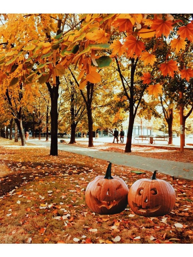 #freetoedit #calabazas #halloween #otoño #day #tree #autumn