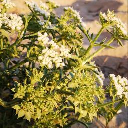freetoedit vegetation