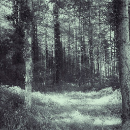 freetoedit field bush trees nature
