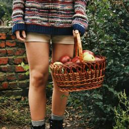 apples appleseason autumnmood sweaterweather coldmorning