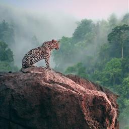 freetoedit simple jaguar forest nature