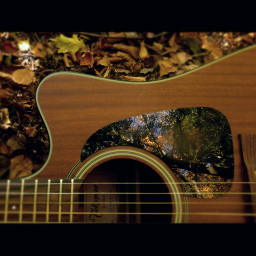 forest guitar reflection patch autumn