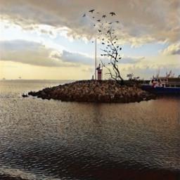 denizfeneri birds sunset sunsetsky