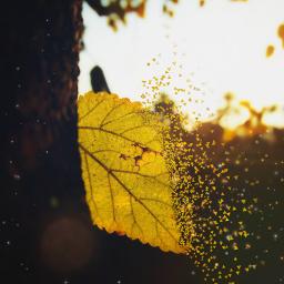 aurmun leaf leafart dispersion picsart
