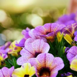 flower purple yellow depthoffield garden