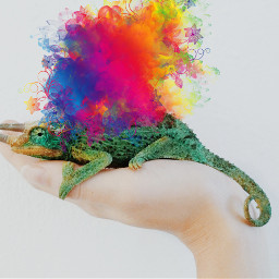 freetoedit ircreptile reptile