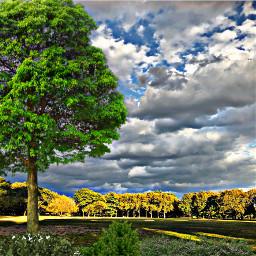 trees bushes sunny_day bluesky field freetoedit