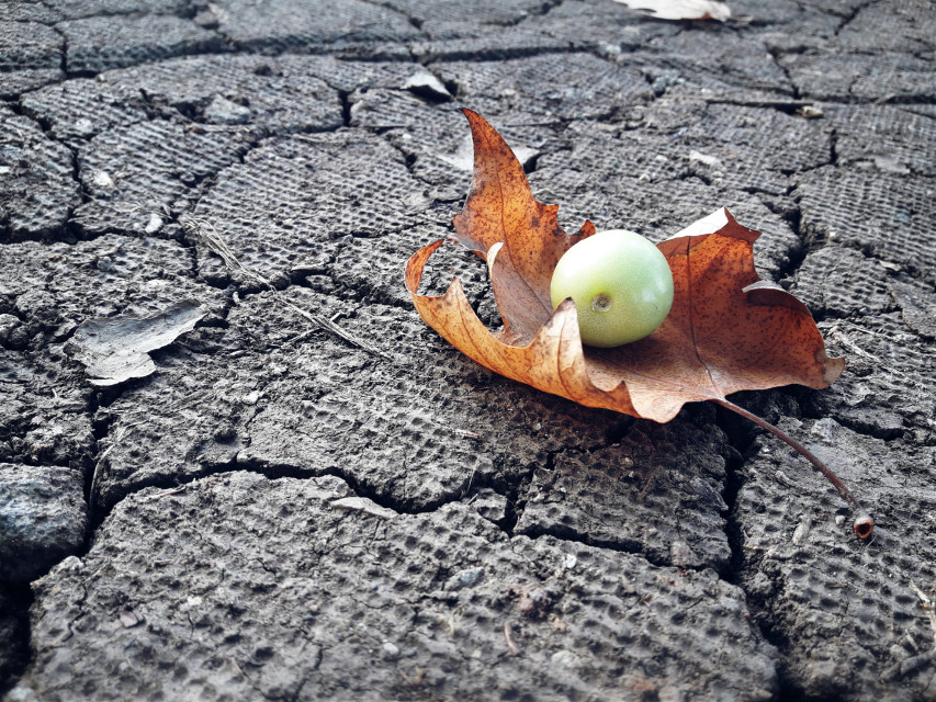 #autumn #autumnleaves #fruit #leaf #remixit