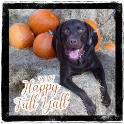 happyfallyall supercooper pumpkinpatch2018 freetoedit
