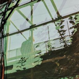 worker green shadow plant freetoedit