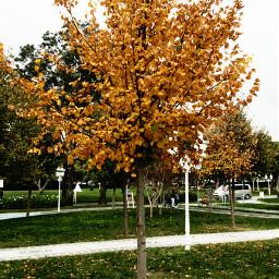 freetoedit helloautumn september autumn