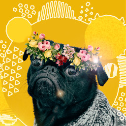 freetoedit pug puglove