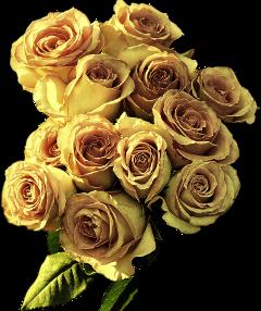 bouquet bouquetofflowers rosebouquet yellow yellowrose freetoedit
