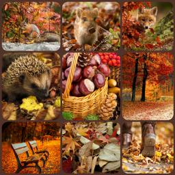 autumn animals animal squirrel fox ccfallcollage