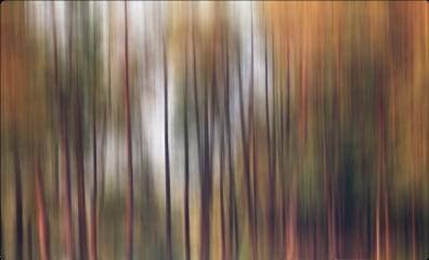 freetoedit blureffect autumn autumnvibes trees