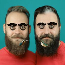 freetoedit борода усы птица beards ircmovemberkickoff