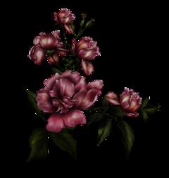 bmrs flower flowers freetoedit