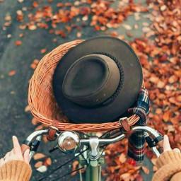 freetoedit autumn photography