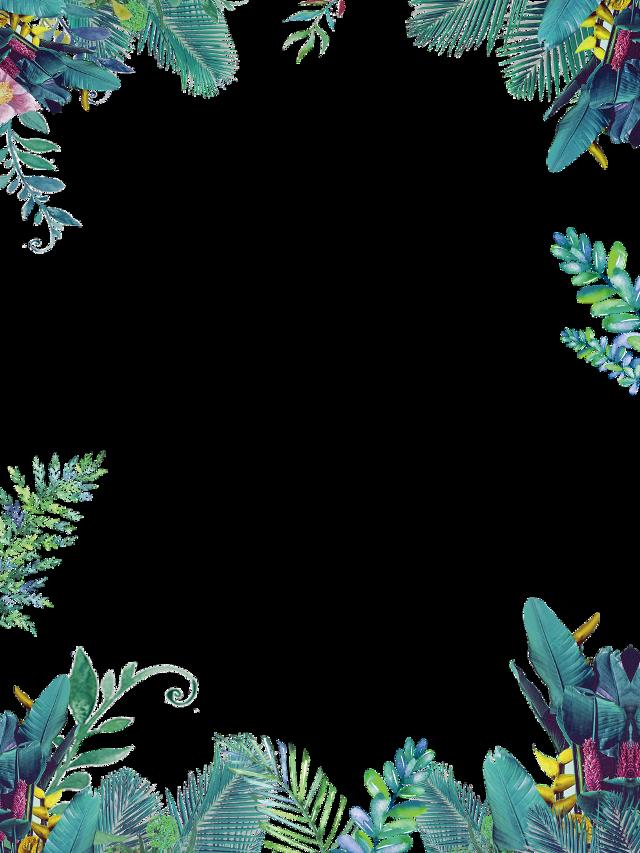 #frame #jungle #jungleframe #tropicalframe #tropical #tropic #leves #leaf #leavesframe #floralframe #floral #flowers #flowerframe #greenframe #green #summer #summerframe