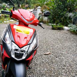 rider dio red love pcmotorbikesandmopeds