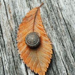 freetoedit remix remixit colorful photography myoriginalphoto nature leaf snail thingsinmybackyard outdoors beauty naturephotography