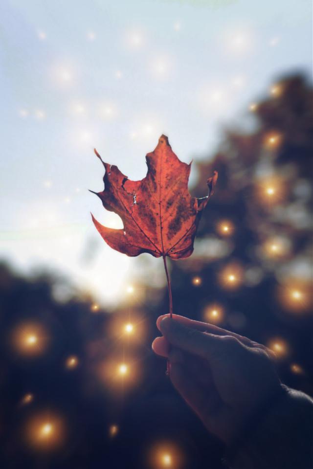 #freetoedit #autumn #leaf