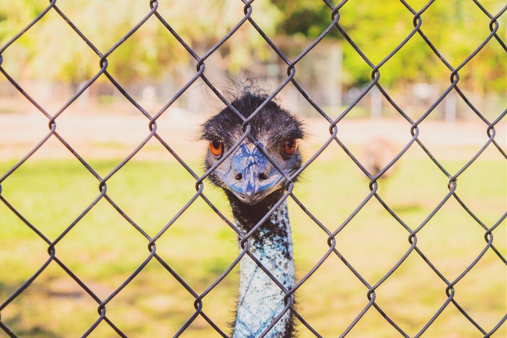 I hope you are having a beautiful day my friends! 🙋🙏💐🌸🌹🌷🌺 #freetoedit #kpp1 #filter #emu #bird #fence #zoo