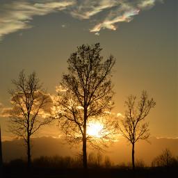 freetoedit pcthegoldenhour photography sunset trees