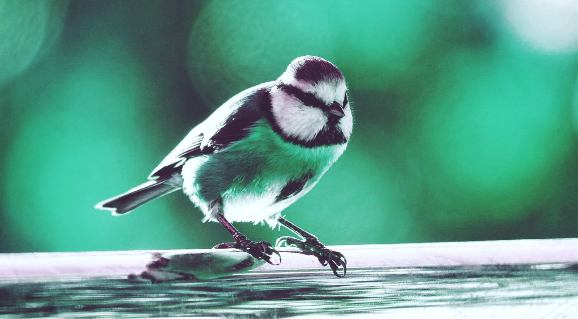 #freetoedit #bird #colorsplash #nature #colorful thank you very much :)