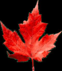 leave autum red season freetoedit