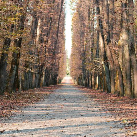 #freetoedit,#pcroads,#photography,#nature,#autumn