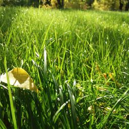 green naturephotography