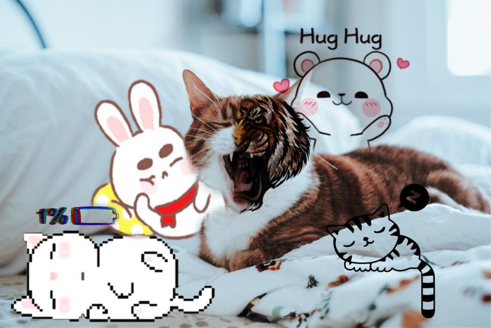 #lfl #l4l #editbyme #meow #cat #hoam #ff #d2p #animal
