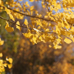 freetoedit autumn yellow