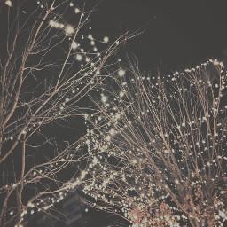 vintage lights trees winter cold freetoedit