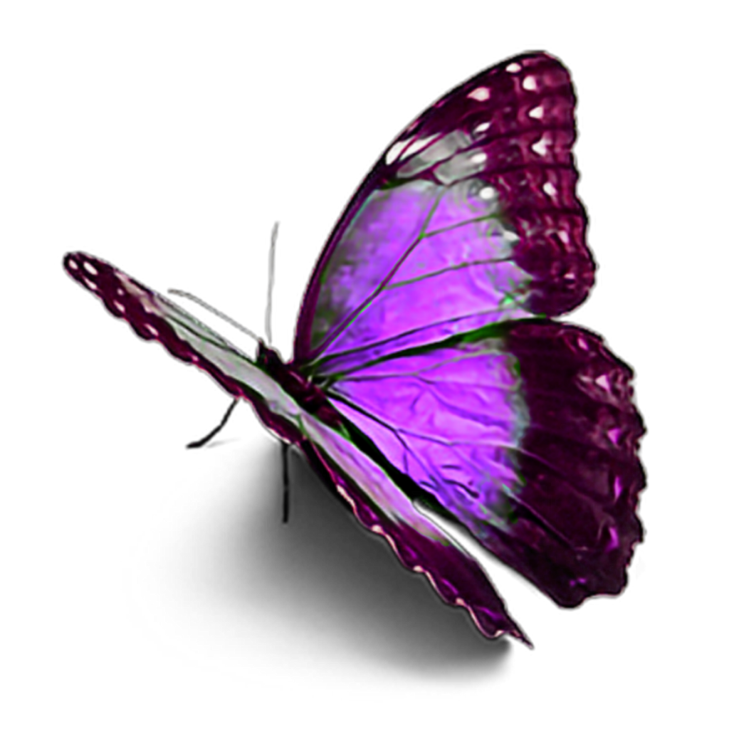 #purplebutterfly