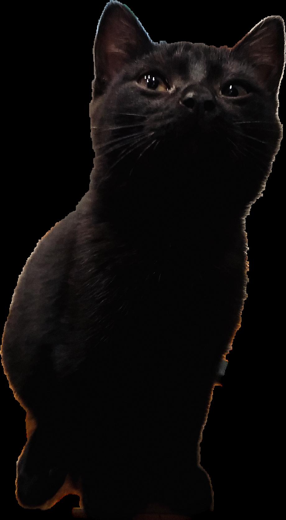 #котёнок