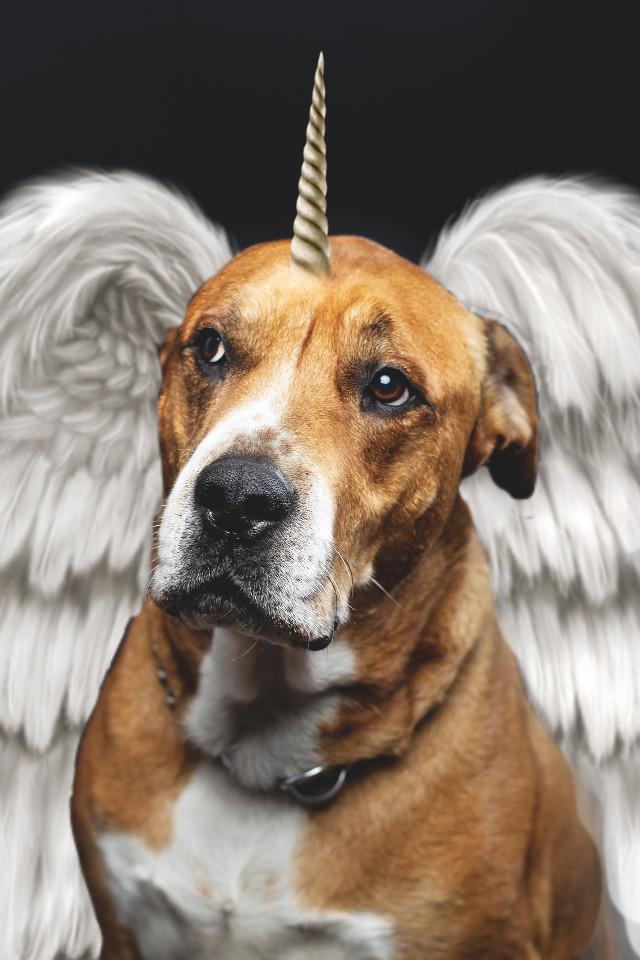 #freetoedit #dog #unicorn #doggycorn #angel