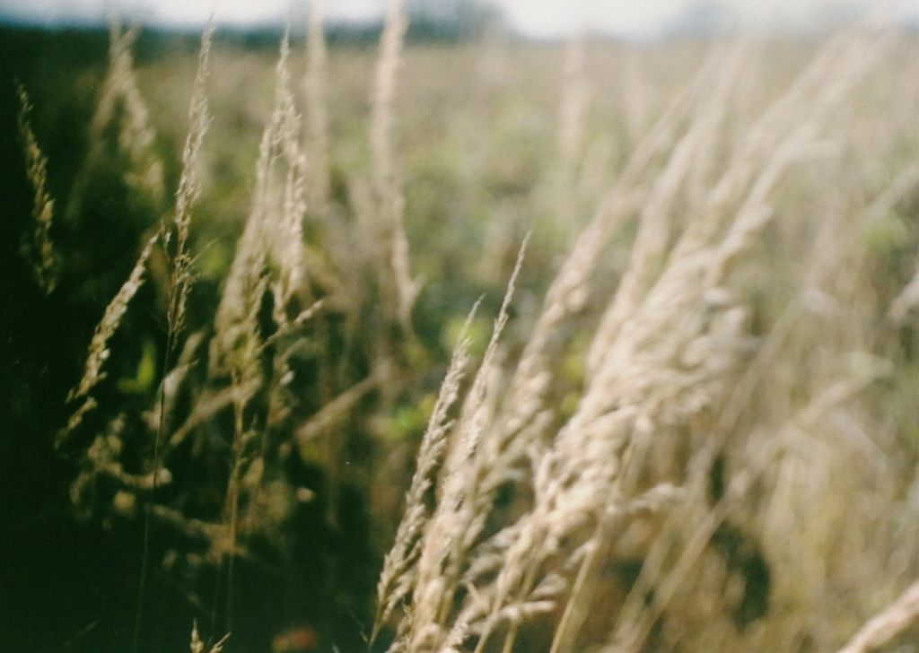First time I tried analogue film photography. In a world where we are used to take a hundred photos so that one will be good, film challenges you to think about what you're going to capture.  #freetoedit #analog #analogue #film #filmisnotdead #field #nature #wheat #wheatfields #colorful #explore #color #focus