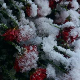 phorography winter snow pccolorwhite colorwhite