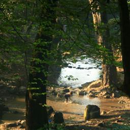 freetoedit forestpark forest myphotoshot myphotography