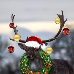 freetoedit deer christmas decorations december ircdelicatedeer