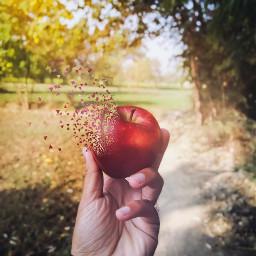 dispersion apple inmyhand picsart fall