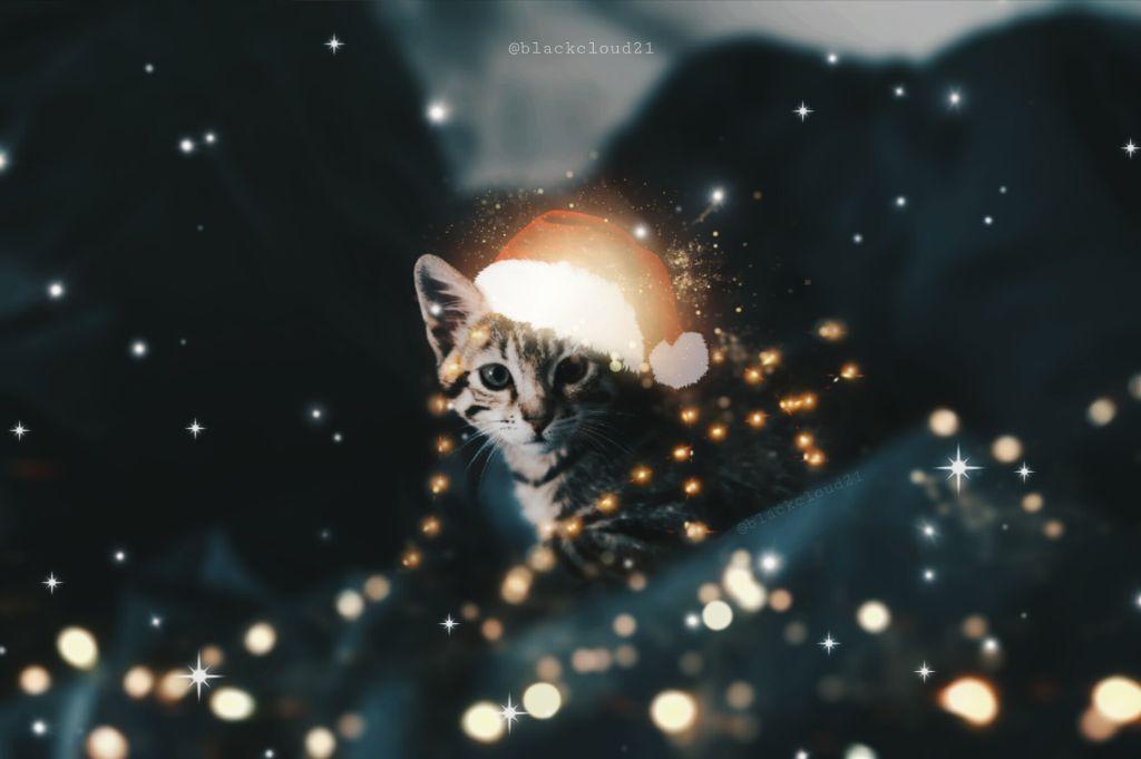 #srcsantahat #christmas #newbrushes #cat #magic #magical #lights #christmaslights #madewithpicsart #madebyme #cute #kitten @picsart Op: Unsplash