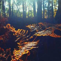 freetoedit naturephotography naturaleza foret dream pctheworldaroundme