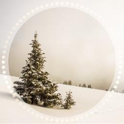freetoedit remixit christmasiscoming snow tree ircwhitechristmas