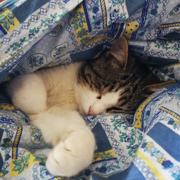 freetoedit pcmyblanket myblanket coldoutside blankets pcindoor pclifestylephoto