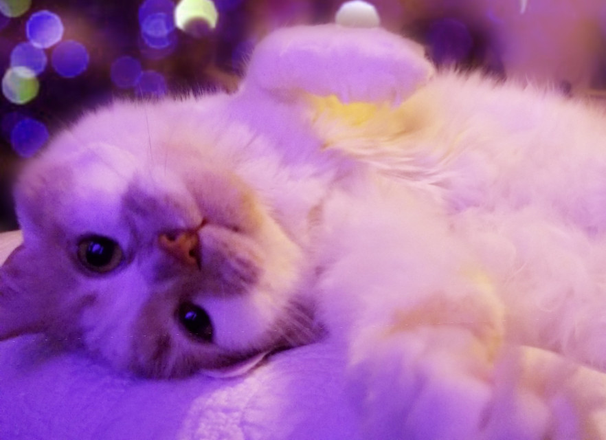 #mycat #catsofpicsart  #freetoedit
